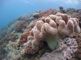 récif de corail mou 1 photo