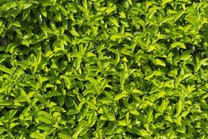 les plantes. photo