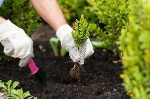 planter un semis. photo