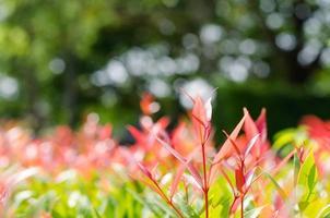 croissance de la plante. photo