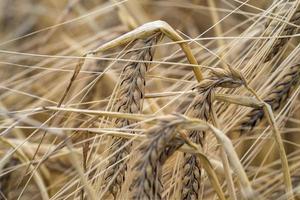 usine de céréales
