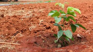 croissance des plantes photo