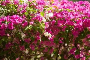 plantes à fleurs au vietnam