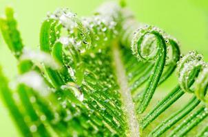 vrille de plante