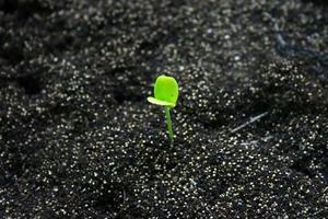 petite plante dans le sol photo