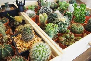 variété de plantes succulentes photo