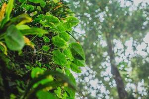 plantes dans la région sauvage
