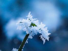 glace sur une plante