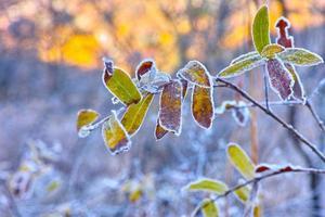 les plantes élaborent sous le gel