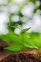 les jeunes plantes poussent et le soleil photo