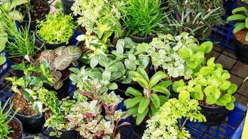 plantes de jardinage plantule nature verte. photo