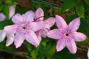 plantes à fleurs dans le jardin. photo