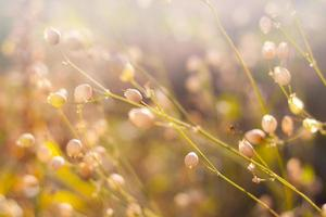 plantes sauvages dans un pré