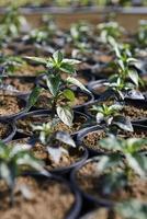 planter un jeune arbre dans une serre