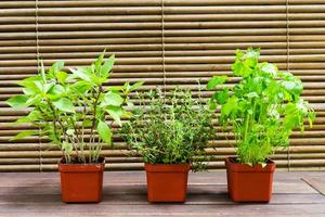 plante de basilic, thym et persil en pot photo