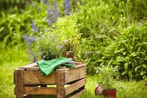 Nature morte jardin plantes en buis en bois photo