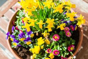 arrangement de plantes de printemps en pot de fleurs photo