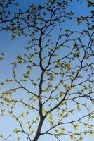 fond de feuilles dorées photo