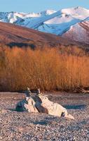 L'équilibrage des roches sur fond de saules jaunes photo