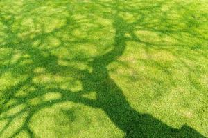 L'ombre des arbres sur l'herbe verte courte au printemps photo