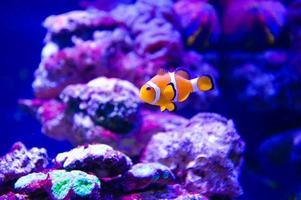 poissons de mer tropicaux extrêmement brillants et colorés photo