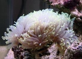 coraux photo