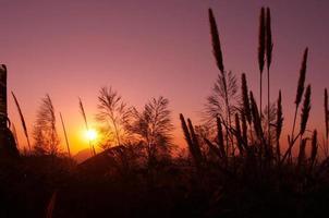 silhouette plante après le coucher du soleil photo