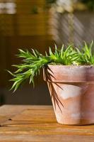 phototropisme. plante poussant vers la lumière du soleil. photo