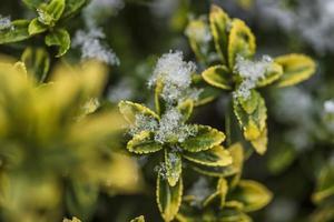 plante givrée de nature hivernale