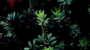 plante verte photo