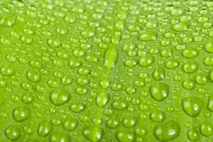 gouttes deau sur une feuille de plante verte photo