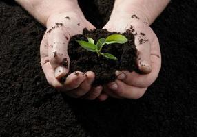 fermier main tenant une jeune plante fraîche photo