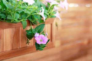 Panier suspendu avec des plantes à fleurs roses sur le mur en bois