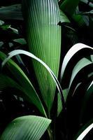 folhas verdes photo
