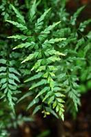 feuilles de fougère verte