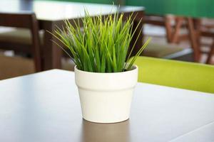 herbe en pot posée sur la table photo