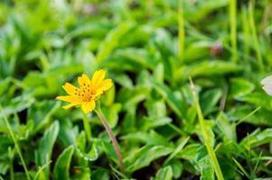 singapour dailsy dans le jardin
