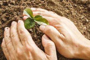 main couvrir la jeune plante photo