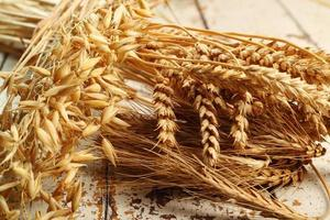 plantes céréalières. blé, seigle, avoine (avena). photo