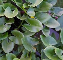 belles plantes à fleurs de lotus rose avec feuille verte