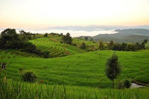 rizières en terrasses paysage sur la montagne
