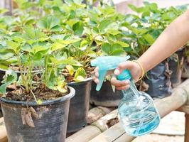 pulvériser la plante. photo