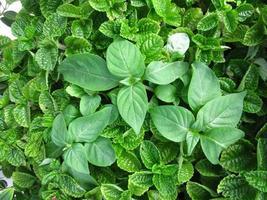 plante dans le monde photo