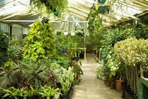 vue des plantes de serre à la pépinière