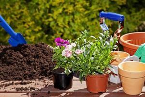 planter des fleurs dans la maison de jardin photo
