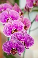 orchidées. photo