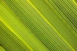 feuille de palmier de près photo