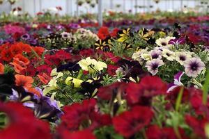 flores de mexico para el mundo photo