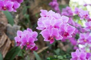 bouquet d'orchidées violettes
