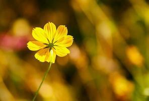 Repeuplement d'insectes à fleurs jaunes en Asie